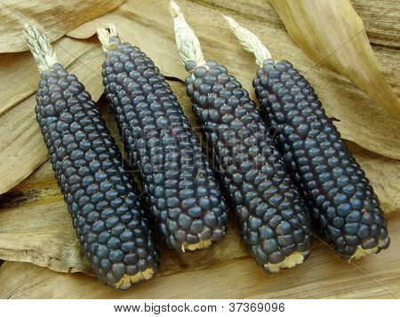 mini blue corn on dry leaves background