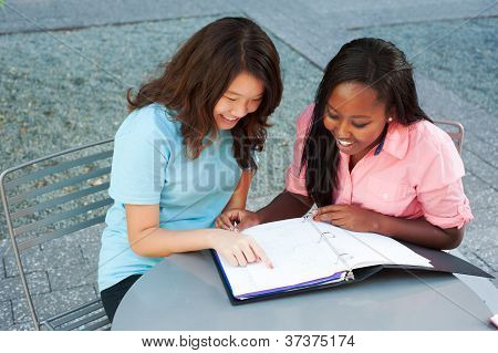 Two Friends Studying Together