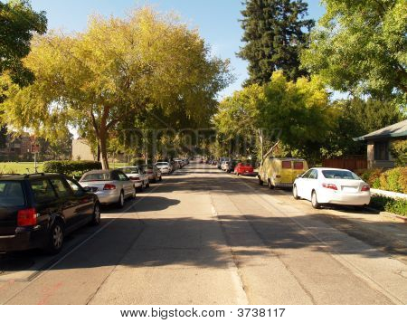 Tree Covered Street In Morning Light With Cars