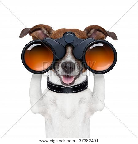 Binoculars  Searching Looking Observing  Dog