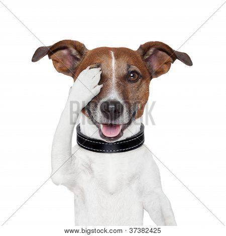 Hiding Covering Eye Dog