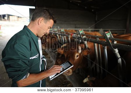 Agricultor no celeiro usando tablet digital