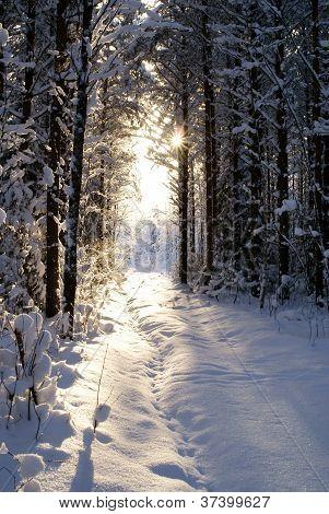 Sun beam in dark winter wood