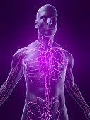 Каждому человеку, заботящемуся о своём здоровье, необходимо знать, где расположены лимфоузлы на его теле.