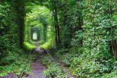 image of tunnel  - Natural tunnel of love formed by trees in Ukraine - JPG