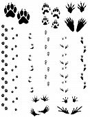 image of wolverine  - Paw prints and tracks of five different animals. Top Row Left to right: Dog Wolverine Raccoon. Bottom Row: Opossum Frog.