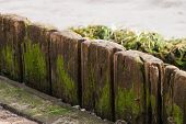 foto of scum  - old wood plank with green scum and algae - JPG
