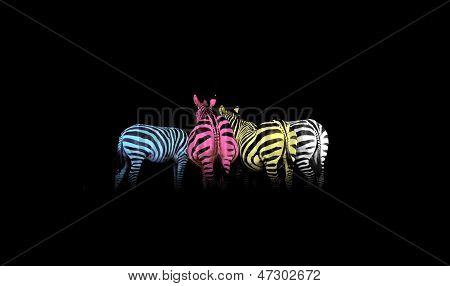 Cmyk Colored Zebras
