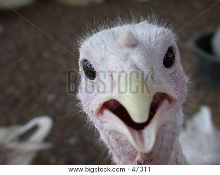 Birdie Surprise