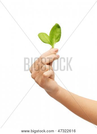 picture of woman hand with green sprout