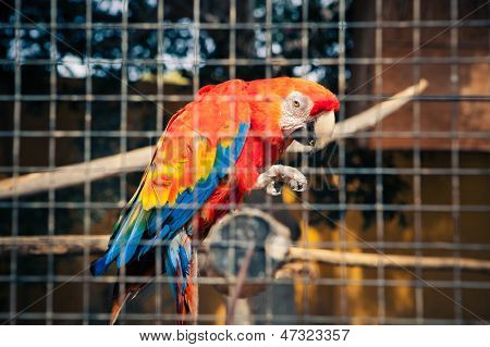 macaw parrot behind the bars