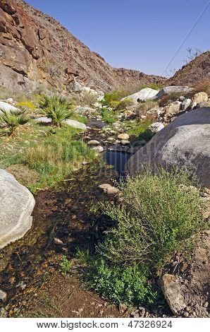 Desert Creek From A Natural Spring