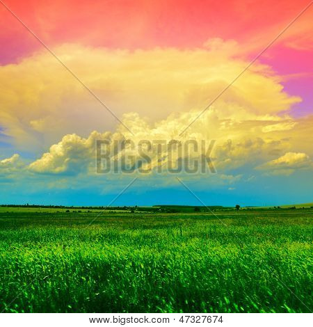 country landscape with green wheat field and blue-pink sky with light clouds