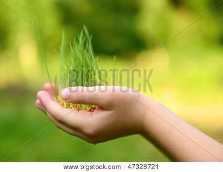 Kid's hands holding green growing plant over nature background. New life, spring and ecology concept