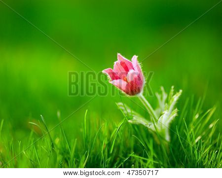 Photo Of Snowdrop Against Green Grass