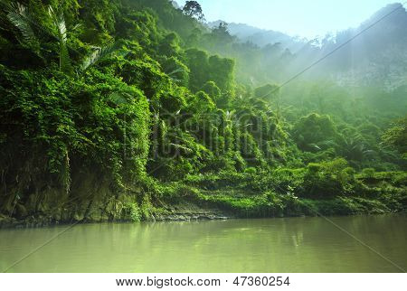 jungle in Vietnam