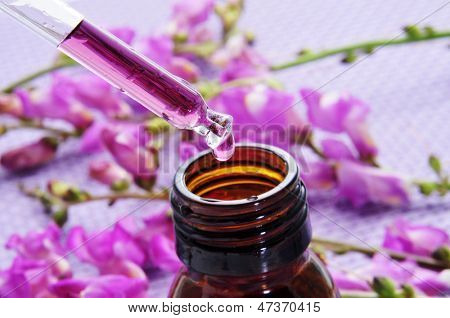closeup of a dropper bottle and a pile of purple flowers on a purple background