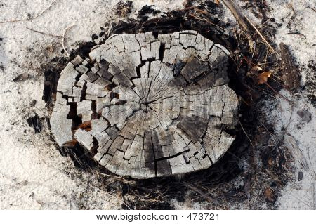 Dry Chopped Tree