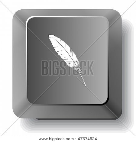 Feather. Vector computer key.