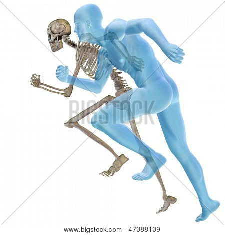 High resolution conceptual 3D human ideal for anatomy and health designs, isolated on white background. It is a man made of a skeleton and a transparent body as in a x-ray