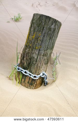 Sunken log
