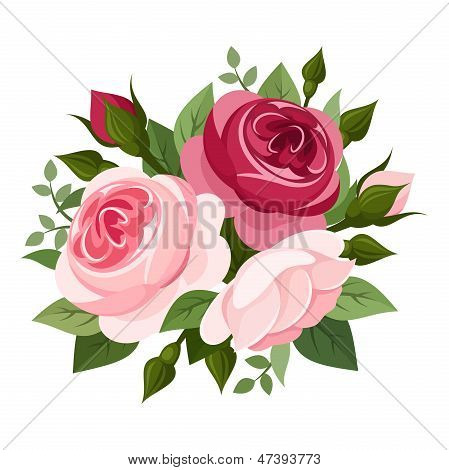 Red and pink roses. Vector illustration.