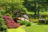 stock photo of arch  - Beautiful manicured Japanese garden with mature Japanese Maple trees surrounding a pond with two wooden arched bridges and a stepping stone path - JPG