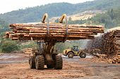 stock photo of tractor trailer  - Large log loader and operations in the log yard at a conifer log mill near Roseburg Oregon