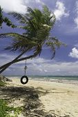 stock photo of tire swing  - Tire swing hanging from palm tree at tropical beach - JPG