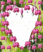 foto of lyre-flower  - An arrangement of Heart shaped Dicentra Spectabilis flowers - JPG