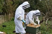 foto of bee keeping  - Beekeepers dressed in protective suits to carrying out maintenance checks on their bee hive using a smoker to calm the bees - JPG