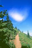 Hiking Trail poster