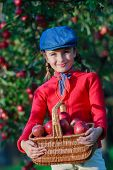 image of orchard  - Apple orchard  - JPG