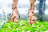 stock photo of fish skin  - fish pedicure spa treatment rufa garra fish - JPG