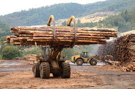 picture of logging truck  - Large log loader and operations in the log yard at a conifer log mill near Roseburg Oregon  - JPG