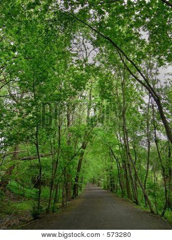 Ravine Path