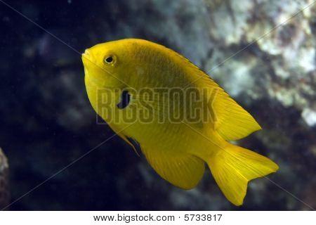 Coral And Damselfish