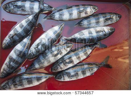 fish at fishmarket