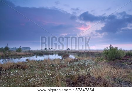 Sunset Over Swamp In Summer