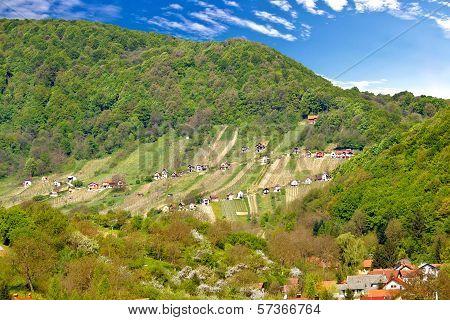 Pictoresque Vineyard Hill In Zagorje