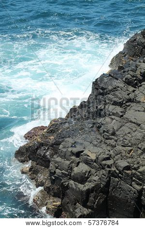 Sydney Cliff Face