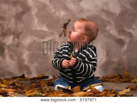 Baby Leaf Fall