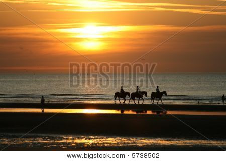 Horseriding In The Sunset