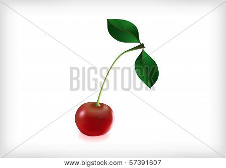 Cherry With Leaves And Waterdrops
