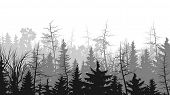 stock photo of coniferous forest  - Vector horizontal illustrations coniferous treetops forest  - JPG