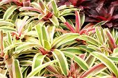 foto of bromeliad  - Bromeliads is a plant with beautiful leaf - JPG