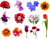 Set of realistic vector flowers, exotic flowers