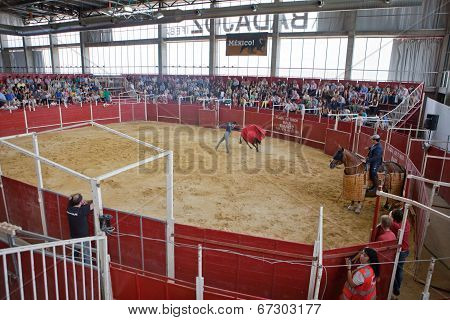 Bullfighter Exhibition Indoors