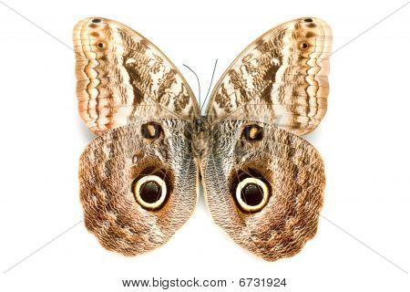 Butterfly-Serie seltene wunderschönen Schmetterling