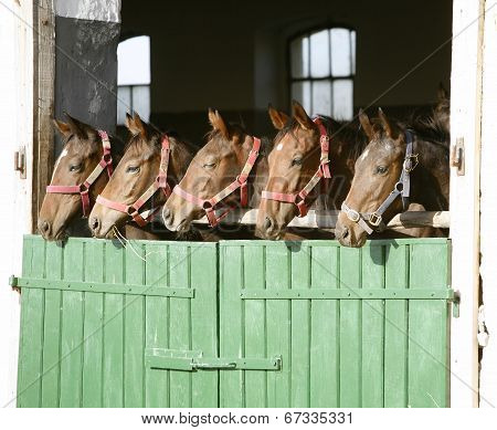 Five beautiful horse in row